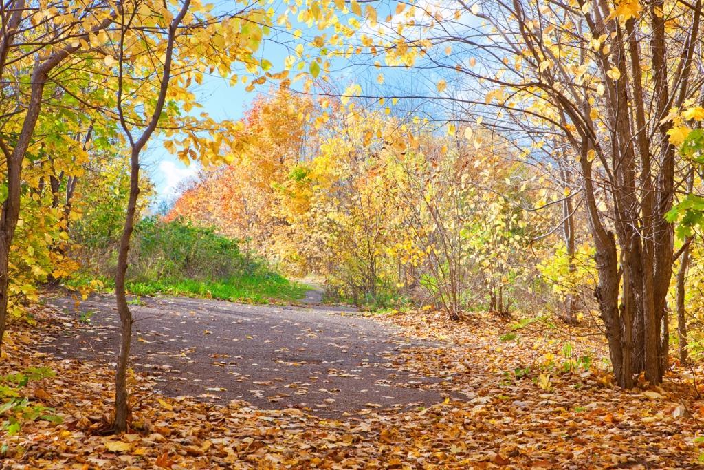 automne-au-bureau