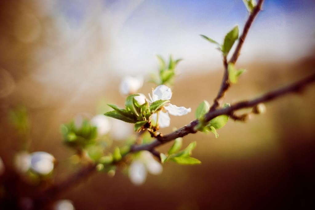printemps-au-bureau