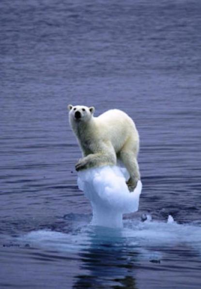 global-warming-resultats